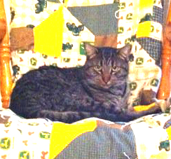 Chalmer lying on our John Deere Quilt :)