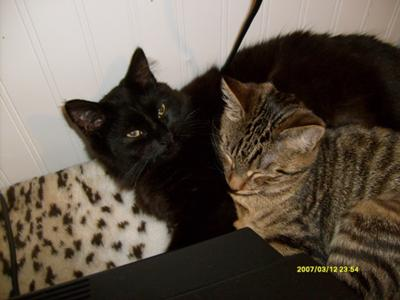 Skooma (black) and Moon Sugar (tabby)