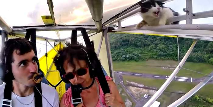 A very unhappy cat on the wing of a microlight aircraft