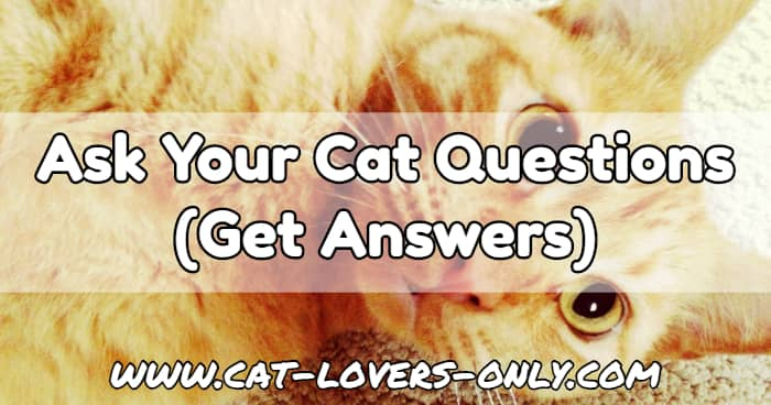 Jazzy the cat with text overlay Ask Your Cat Questions (Get Answers)