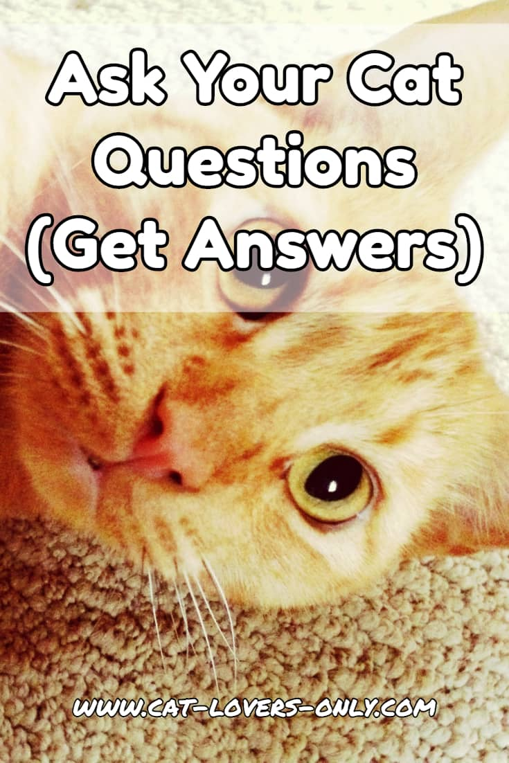 Ask Your Cat Questions Start A Discussion