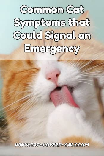 Common Cat Symptoms that Could Signal an Emergency
