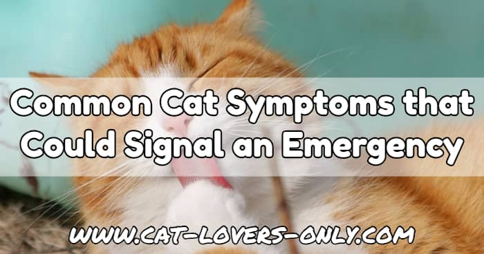 Orange and white cat with tongue out with text Common Cat Symptoms that Could Signal an Emergency