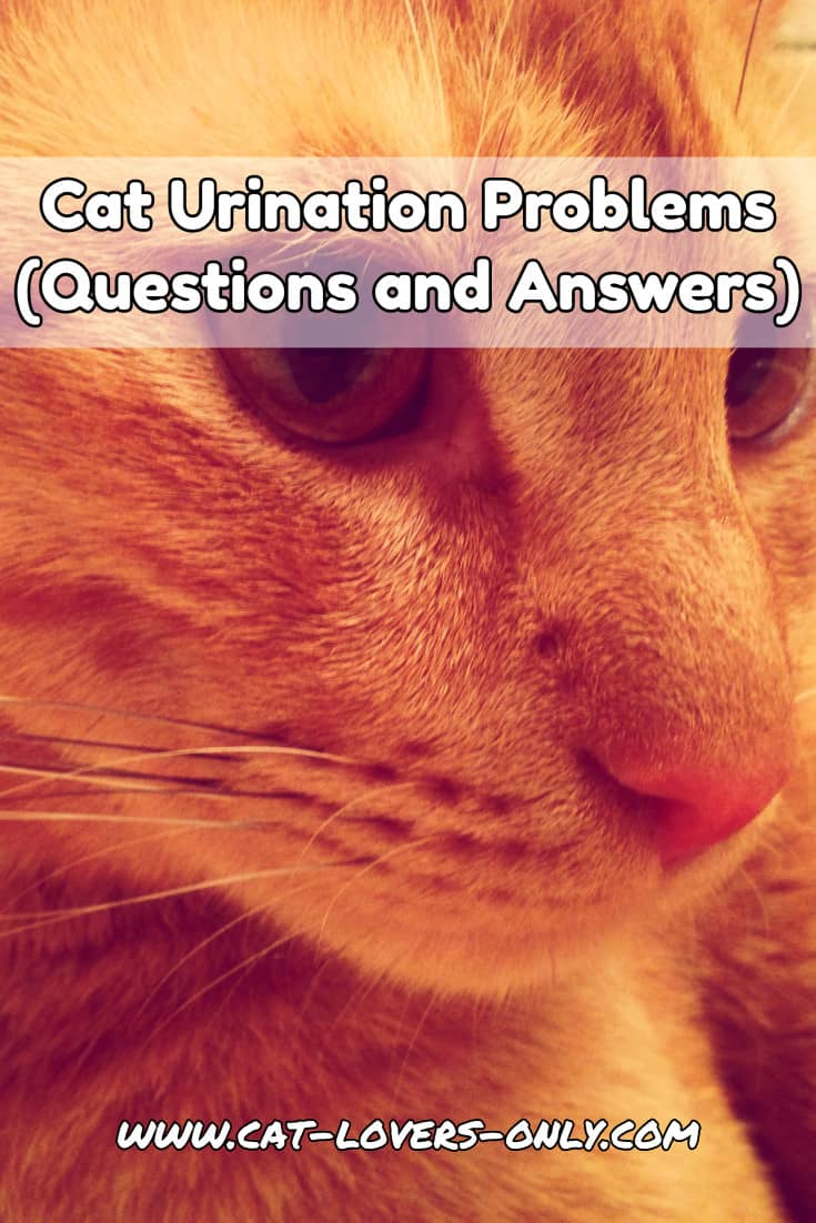 Jazzy the cat's face with text overlay Cat Urination Problems (Questions and Answers)