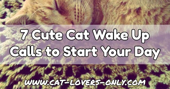 Jazzy the cat with text overlay 7 Cute Cat Wake Up Calls to Start Your Day
