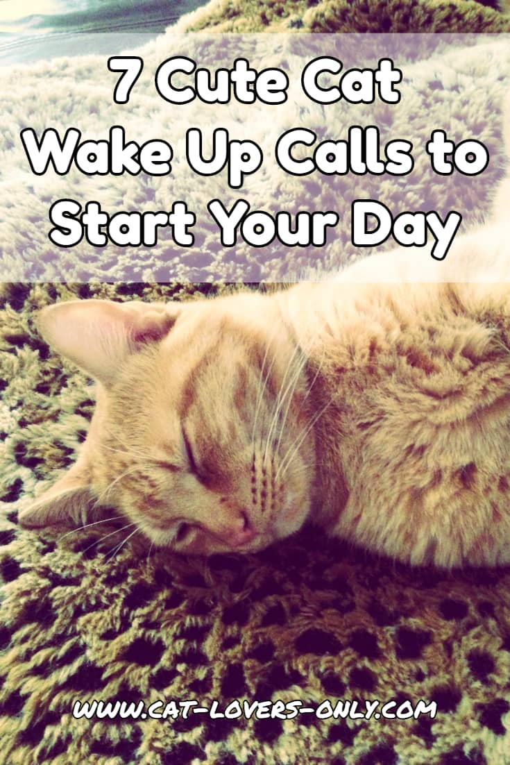 7 Cute Cat Wake Up Calls to Start Your Day