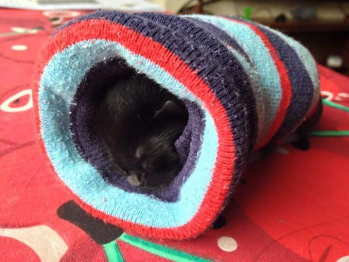 Kitten in a sock