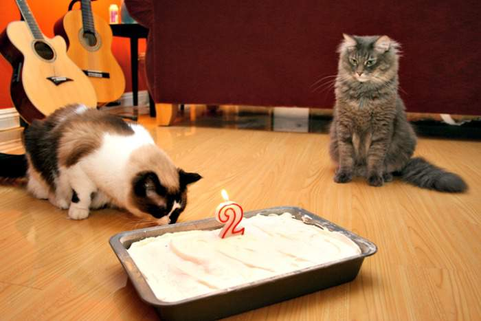 Cats celebrate birthday with a cake
