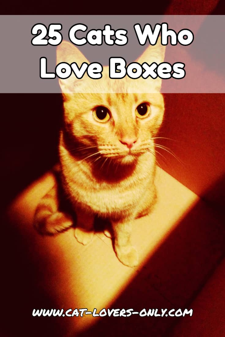 25 Cats Who Love Boxes