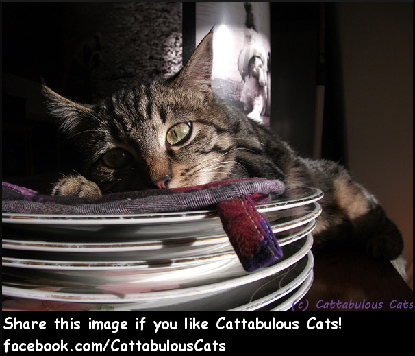 Cattabulous Cats