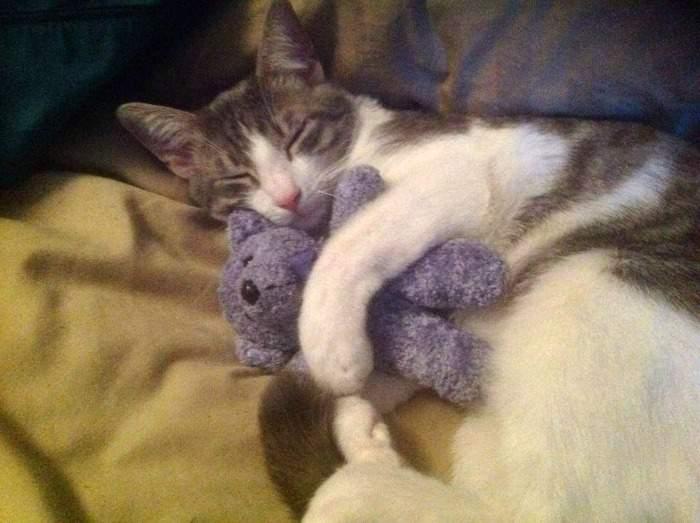 Chan Chan cuddling his teddy