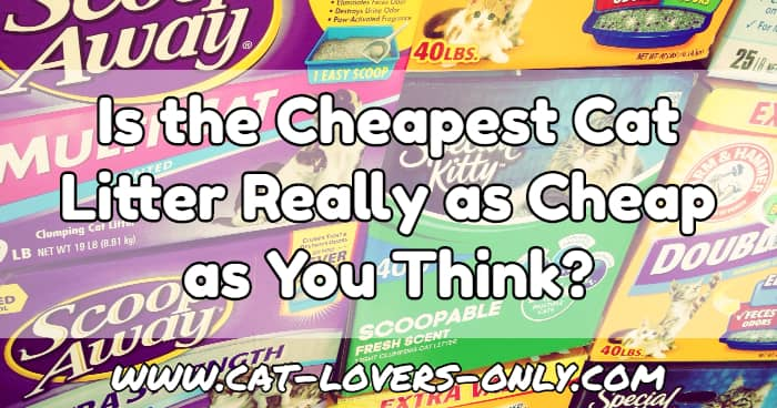 Brands of litter with text overlay Is the Cheapest Cat Litter Really as Cheap as You Think?