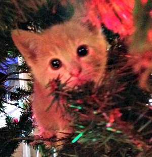 Chester in the Christmas tree