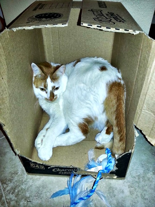 Clipper in a box