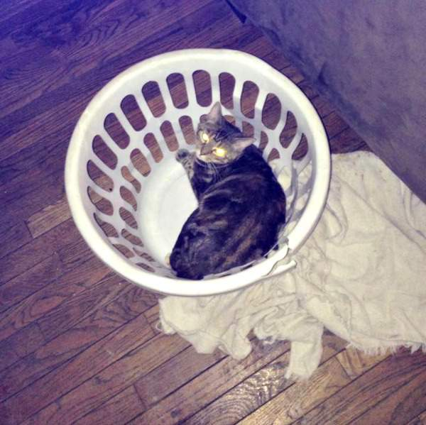 Tabby in a basket