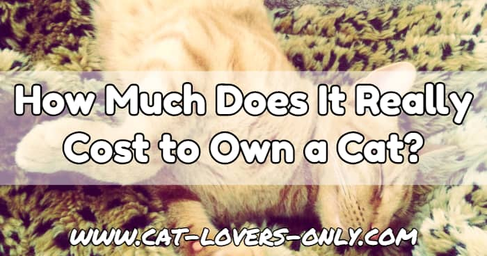 Jazzy the cat with text overlay How Much Does it Really Cost to Own a Cat?