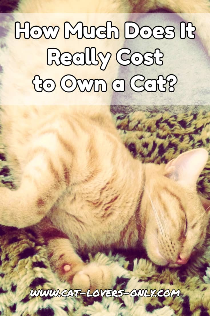 How Much Does it Really Cost to Own a Cat?