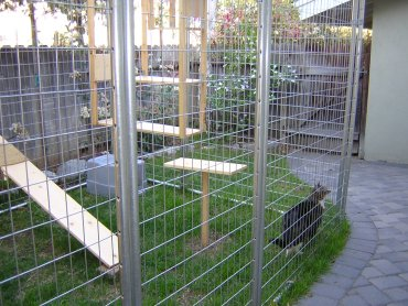 Custom Built Cat Enclosure