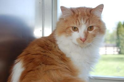 Cute Cat Big Felix Picture
