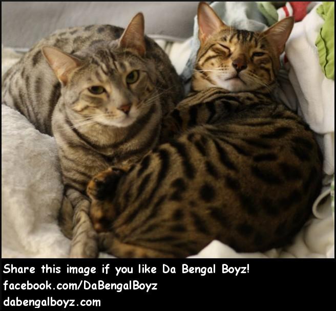Da Bengal Boyz