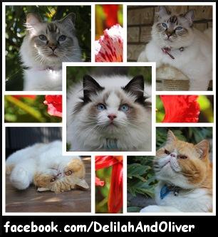 Delilah and Oliver