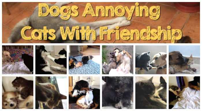 These Dogs Just Wanna Be Friends With Cats - Dogs annoying cats with friendship