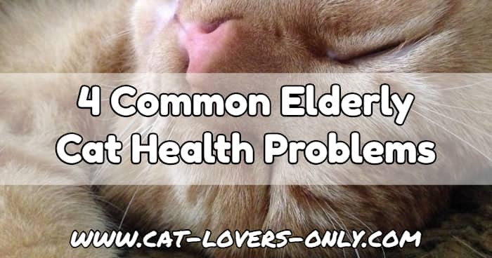 Jazzy cat's face with text overlay 4 Common Elderly Cat Health Problems