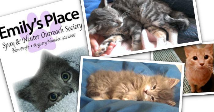 Emily's Place Collage