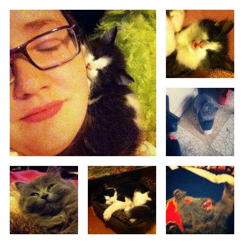 Erica's gang of kitties