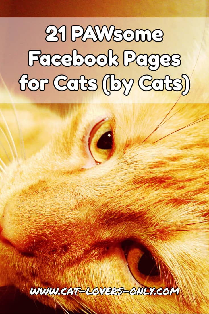 Jazzy the cat's face with text overlay 21 Pawsome Facebook pages for cats by cats