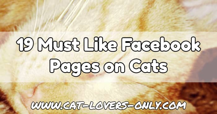 Jazzy the cat's face with text overlay 19 Must Like Facebook Pages on Cats