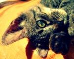 Featured Kitties August, 2013 round 2 thumb