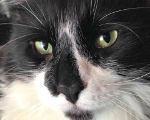 Featured kitties February 2014