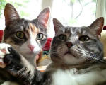 Featured Kitties, February, 2015