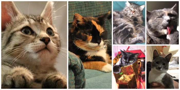 Featured Kitties