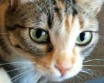 Featured Kitties May, 2015