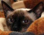 Featured kitties September, 2015