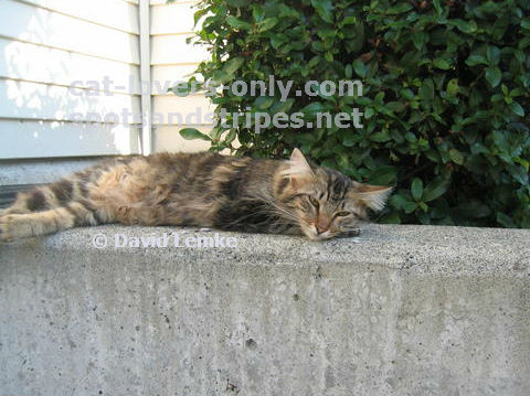 Feral cat Molly
