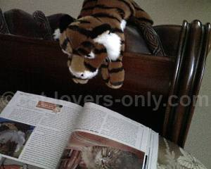 Fluffanutta the stuffed tiger