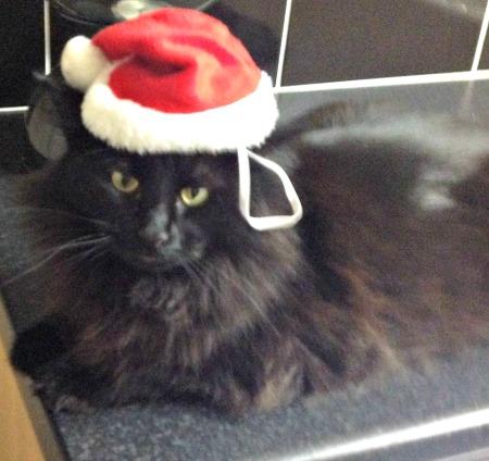 Fluffy as Santa