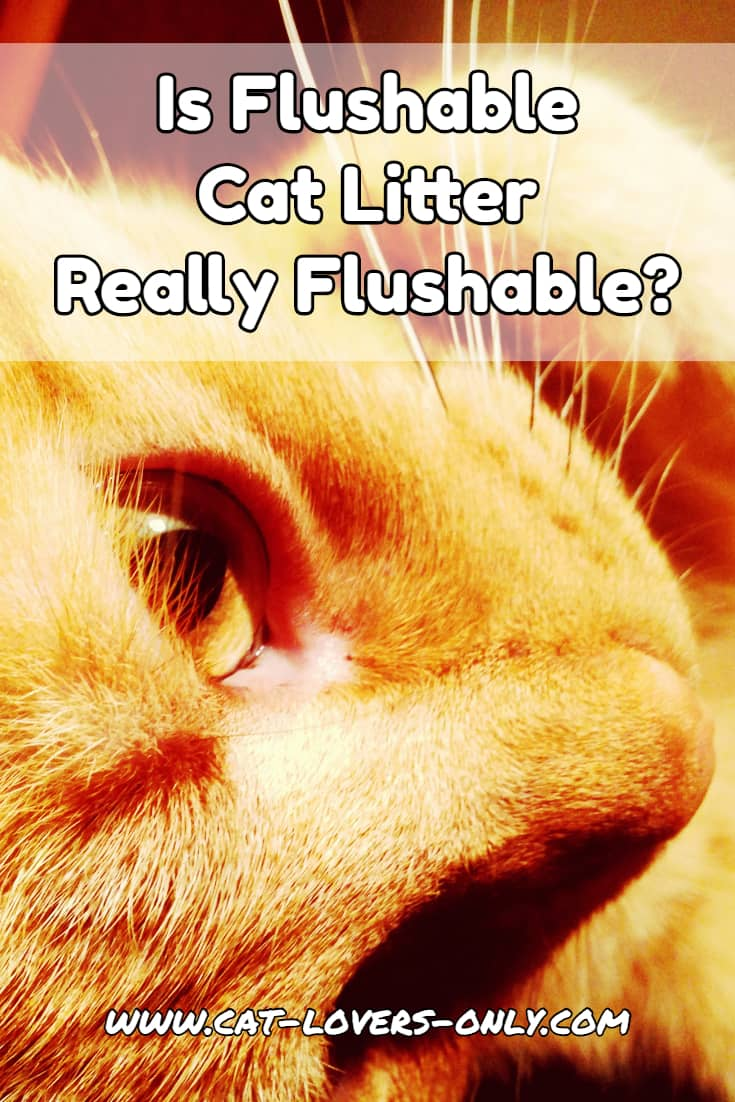 Jazzy the cat's face with text overlay Is Flushable Cat Litter Really Flushable?