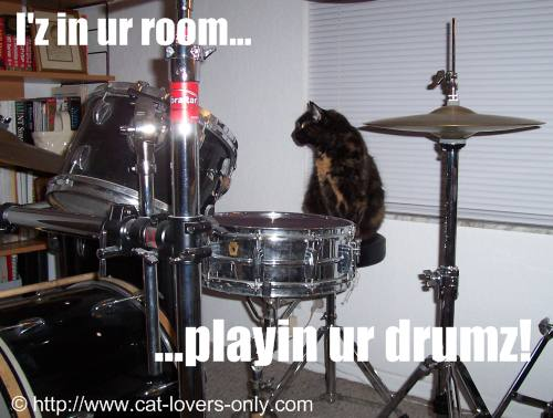 Frankie cat plays drums.