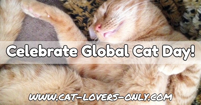 Jazzy the cat celebrates Global Cat Day with a nap