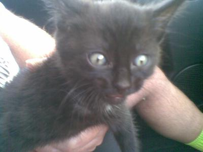 Blackie my kitten