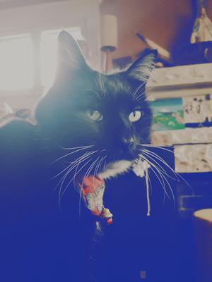 Gunther Cat ♡♡♡♡