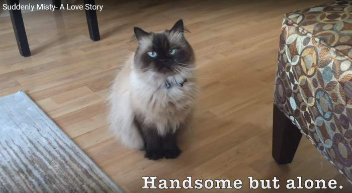 Latte the Himalayan was handsome