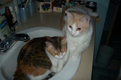 Hansel and Gretel In The Sink