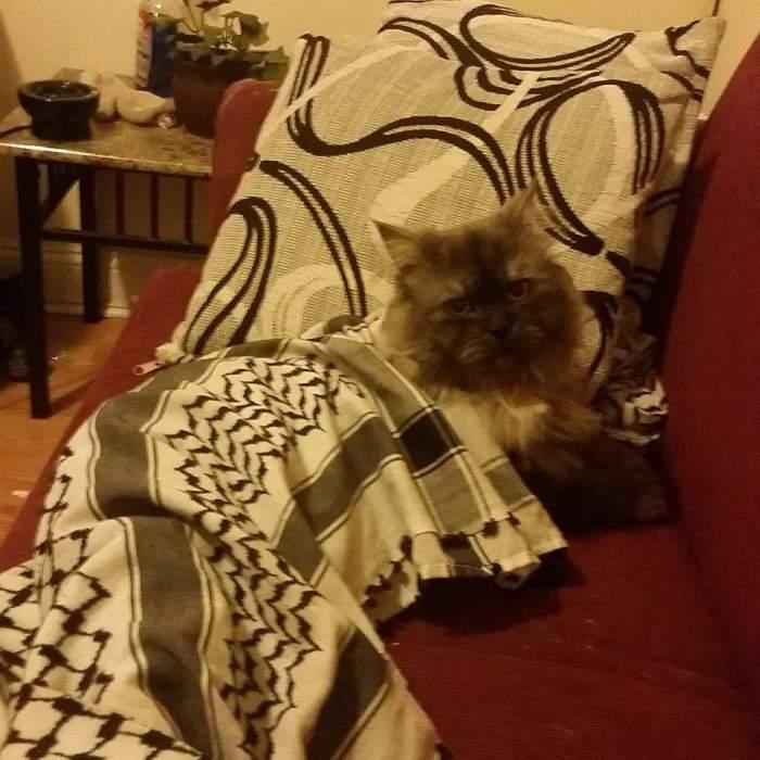 Hazel all comfy