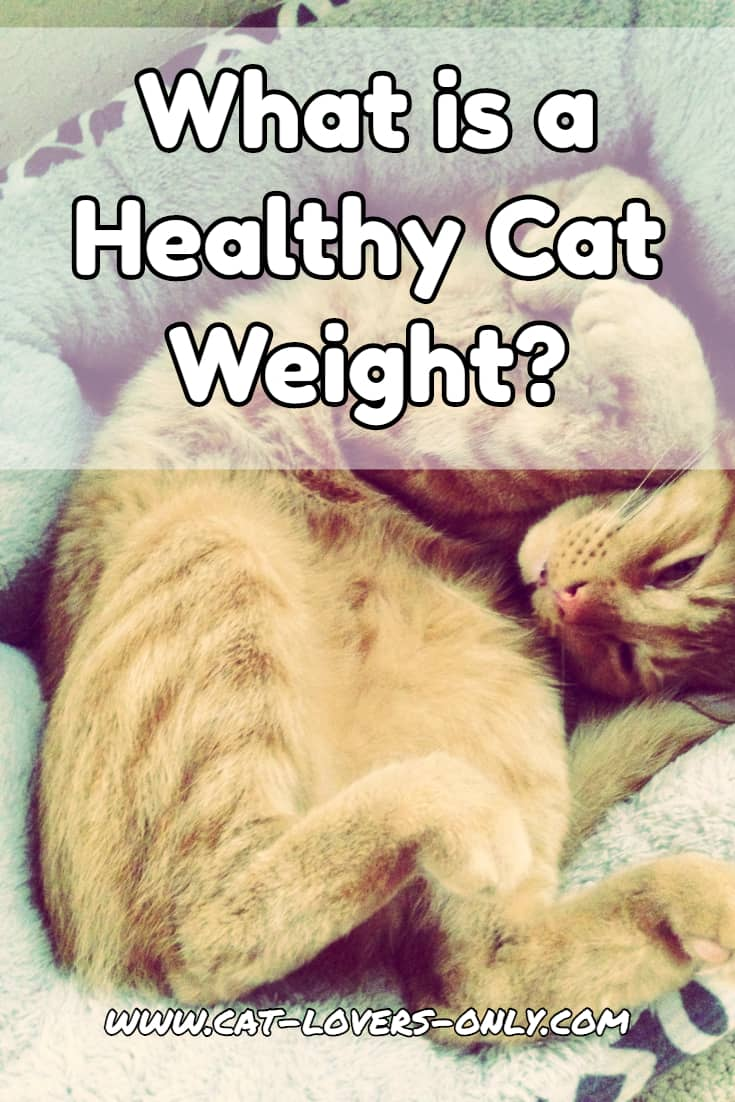 What is a Healthy Cat Weight?