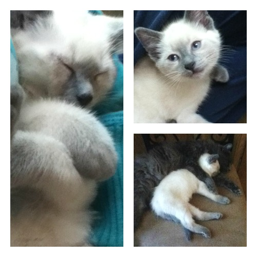 Herbert the kitten